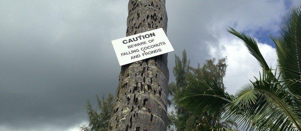 Beware of falling coconuts