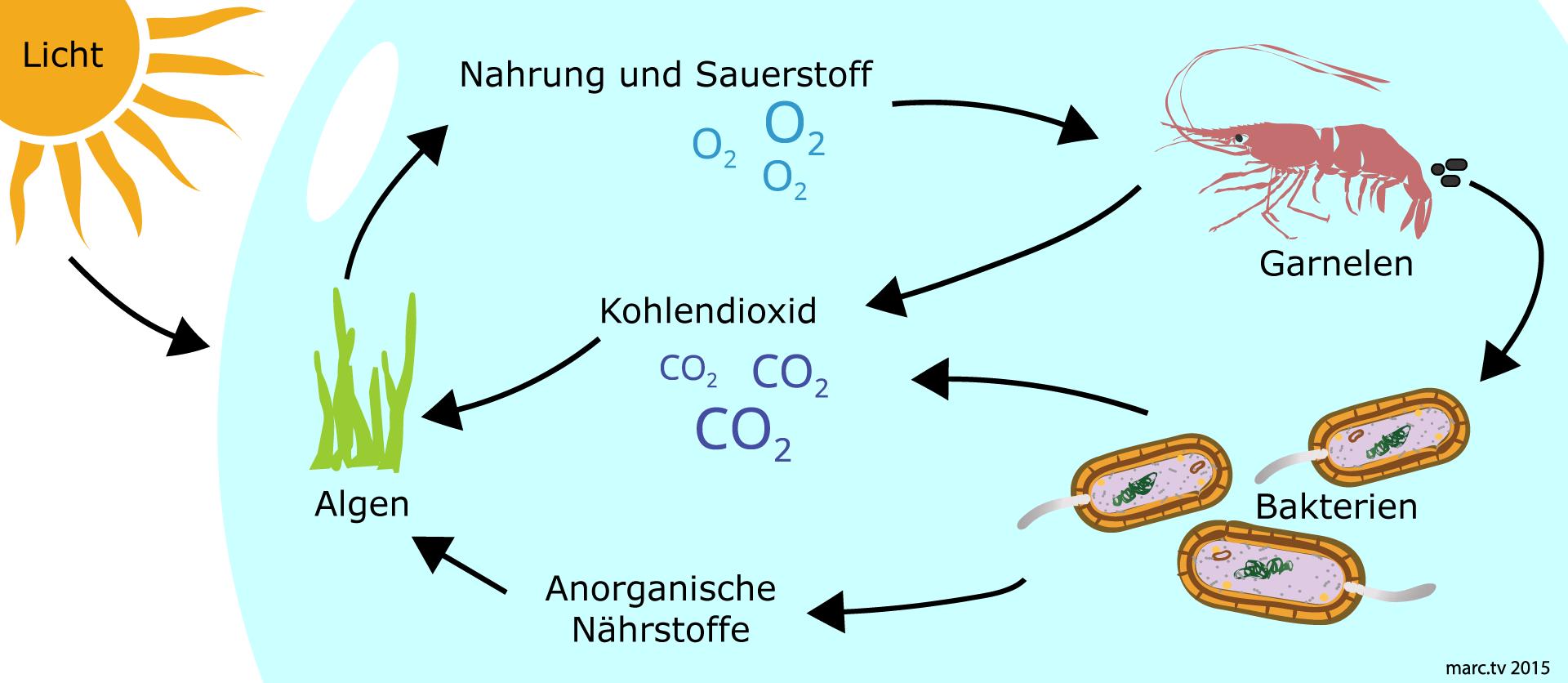 EcoSphere - Wie funktioniert der Kreislauf?