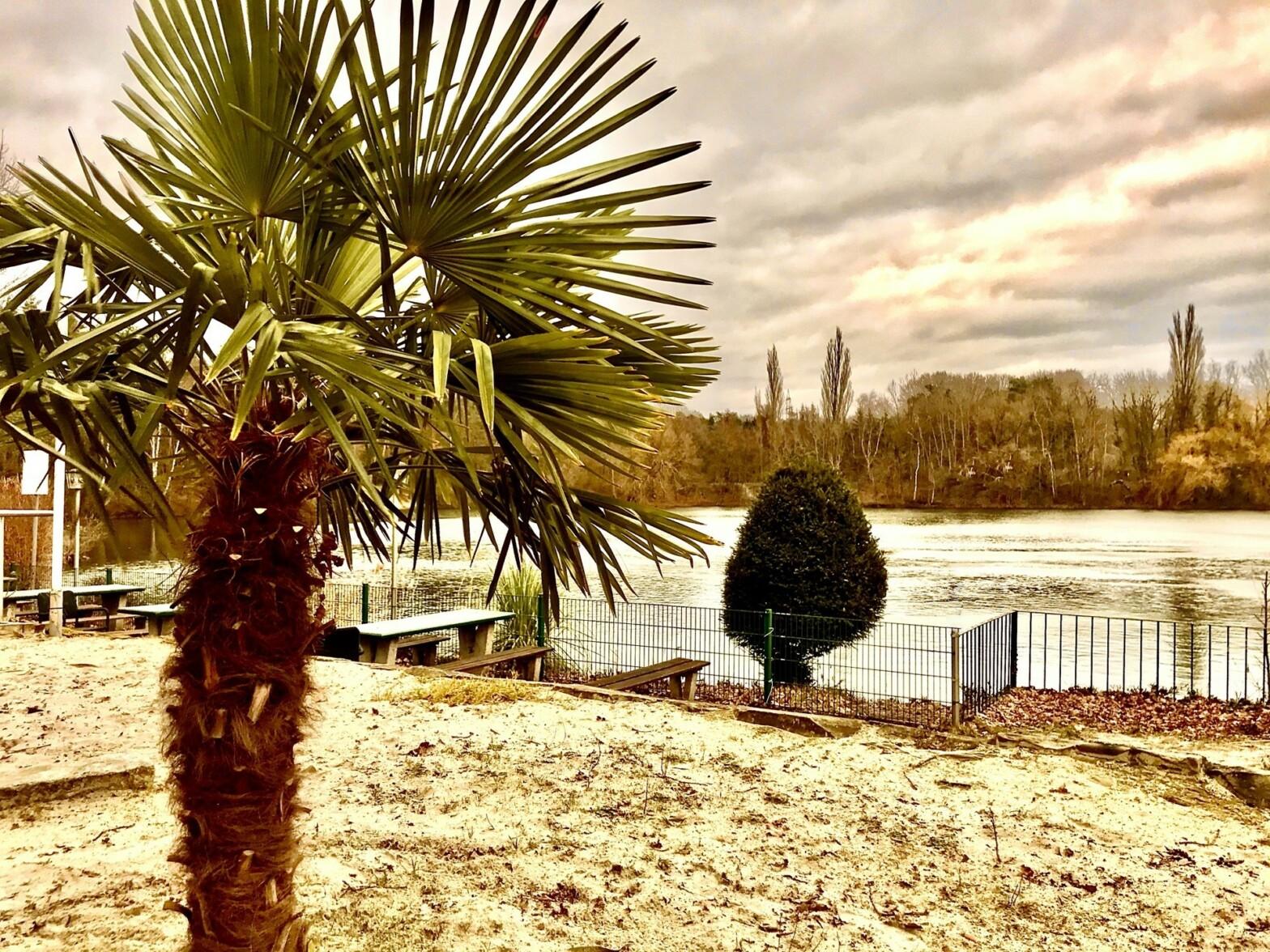 Palme am blauen See. Leicht nachkoloriert.